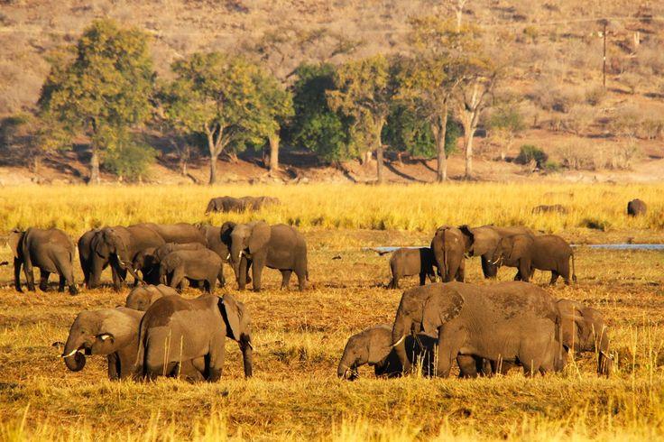 Ao 13º dia de viagem de overland, saímos de Windhoek, chegamos ao Botswana e rumamos a Ghanzi, entre a fronteira e o Delta de Okavango, no Kalahari.