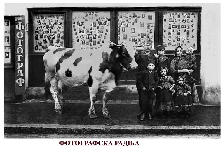 A photo shop in Belgrade with a Serbian family and their cow ~ Serbia