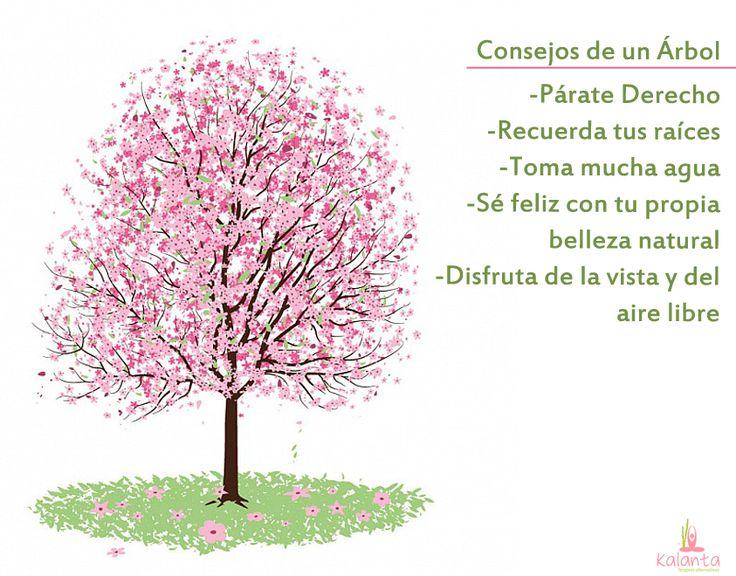 Consejos de un árbol.
