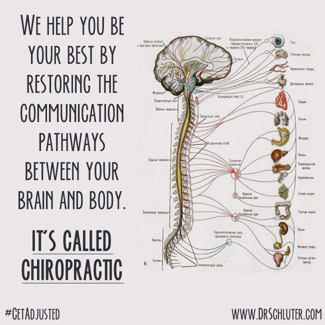 Your nervous system controls every single cell of your body. Get your spine checked ! #getconnected #getadjusted