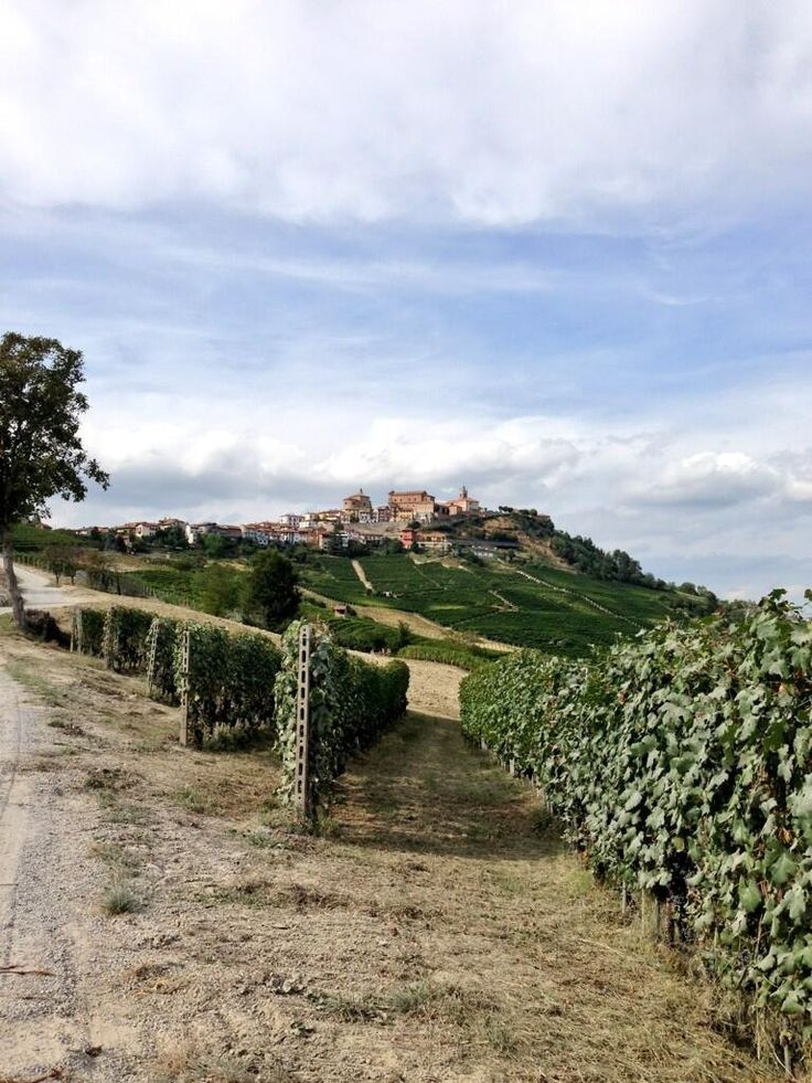 La Morra Langhe, province of Cuneo, region of Piedmont, Italy