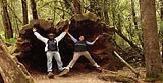 Shoretours - Hobart - Mt Field National Park & Wildlife Tour
