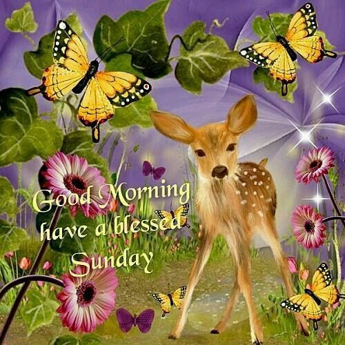 Good Morning, Have A Blessed Sunday good morning sunday sunday quotes good morning quotes happy sunday good morning sunday quotes happy sunday morning sunday morning facebook quotes sunday image quotes happy sunday good morning