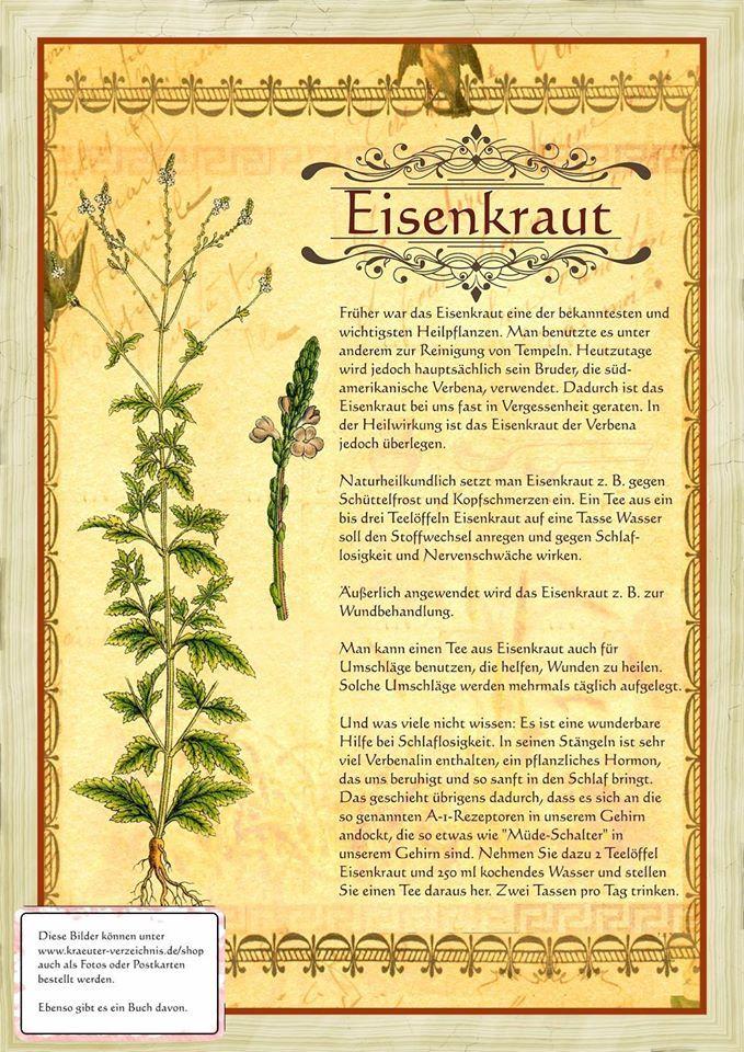 Eisenkraut http://www.kraeuter-verzeichnis.de/