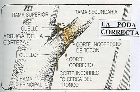 PODA ARBOLES - COMPLETO ~ INFORMACIONES AGRONOMICAS
