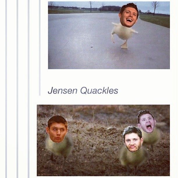 the fandom never ceases to amaze me.