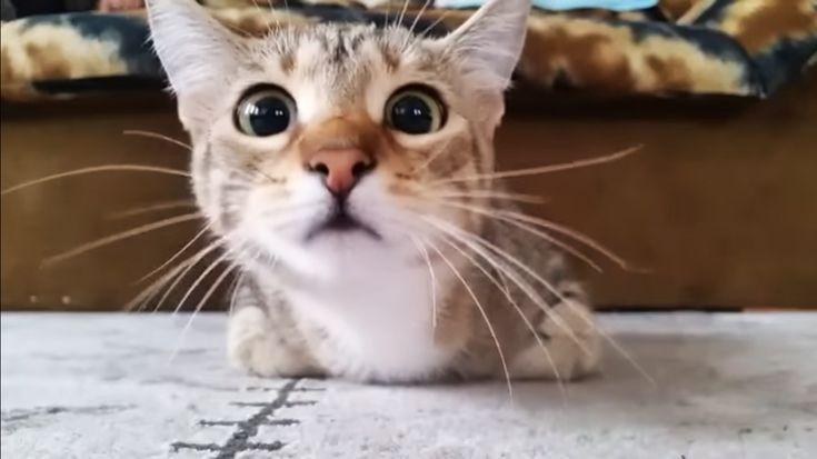 Tripas de gato online dating