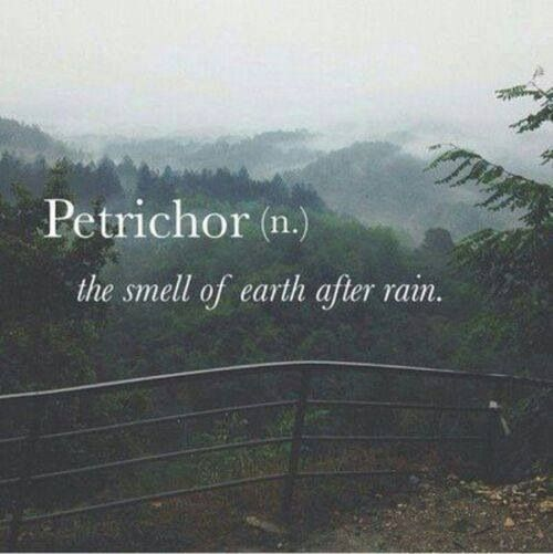 Petrichor - like this word
