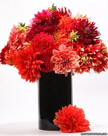 Dahlias are very exuberant and seduce the eye, so it is better to get playful than to try to control their shape in a static arrangement. Use one color as a base, playing with another on top -- it's almost impossible to go wrong and you'll get a gorgeous piece.