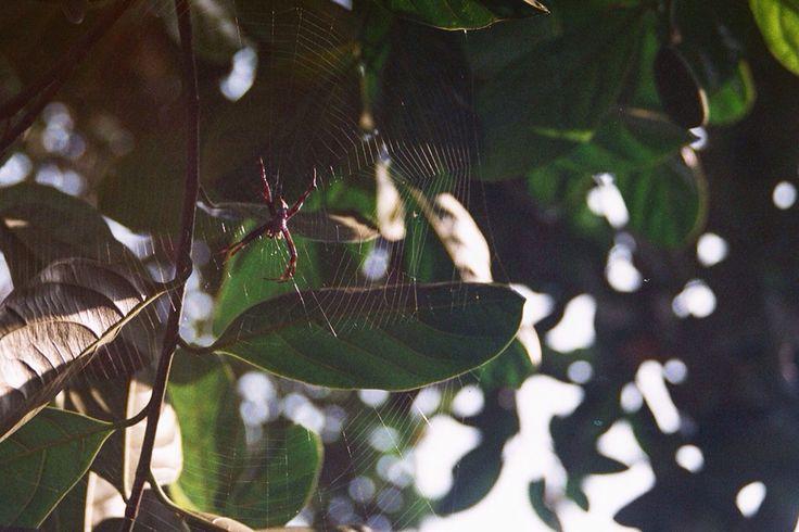 spider on film 35mm