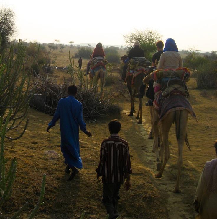Camel Trek Jaisalmer Rajasthan India 8X10 Photograph chamelagiri.etsy.com