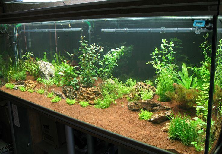 7 Best Aquarium Images On Pinterest Fish Aquariums Fish Tanks And Aquarium Ideas