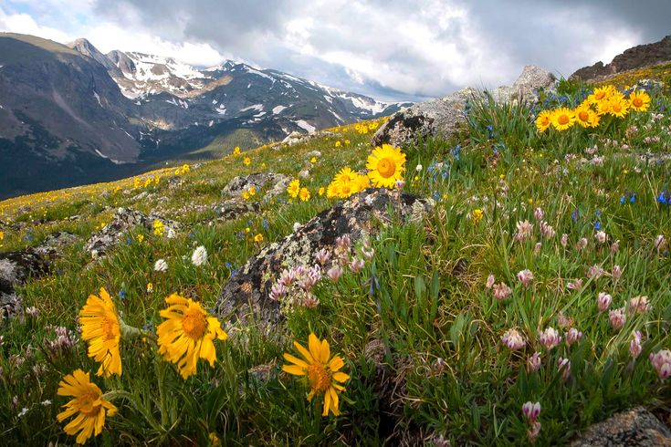 11 Best Hikes to See Wildflowers This Spring and Summer - 303 Magazine