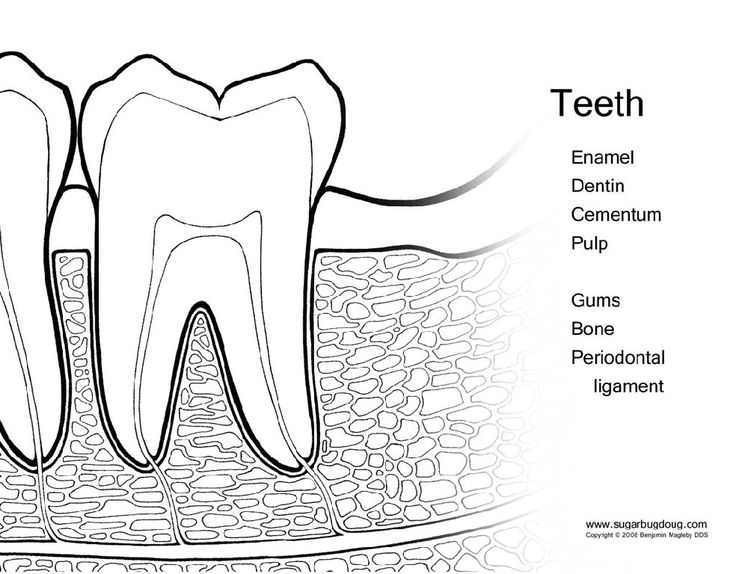 simple diagram of tooth simple diagram of the nitrogen cycle 15 best kids dental health images on pinterest | healthy ...