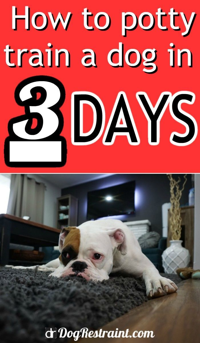 How To Potty Train A Dog In 3 Days Dog Restraint In 2020 Potty Training Puppy Training Your Dog Training Your Puppy