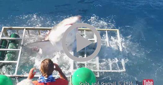 La terrifiante attaque d'un requin qui a réussi à s'introduire dans une cage de protection censée garantir la vie du plongeur qui s'y trouvait.