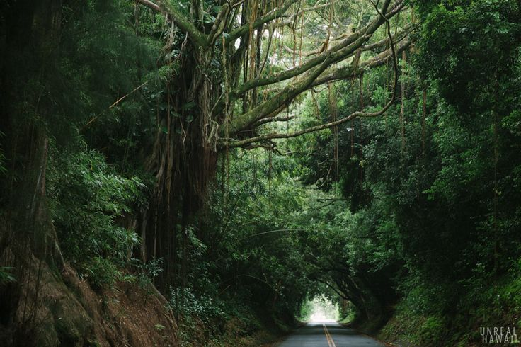 Photowalk through the rainforest to see waterfalls and ruins, Oahu