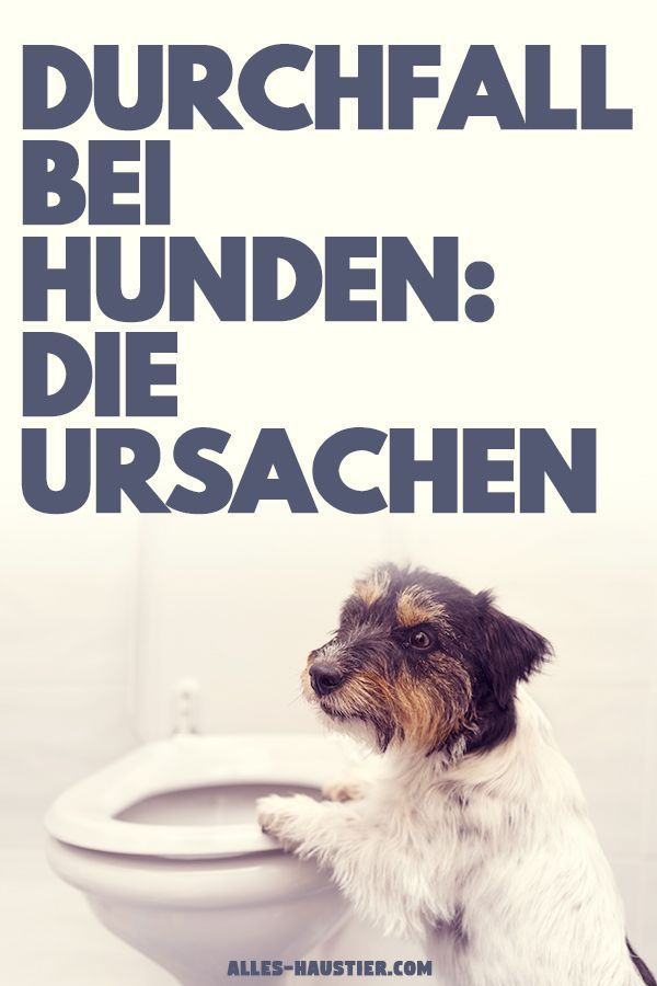 Hund Hat Durchfall Das Solltest Du Wissen Hund Hat Durchfall Hunde Und Durchfall Hund