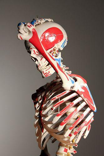 Calcio, vitamina D y osteoporosis.