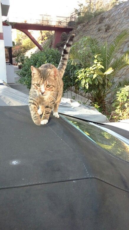 Mini tigresa #LaTobias
