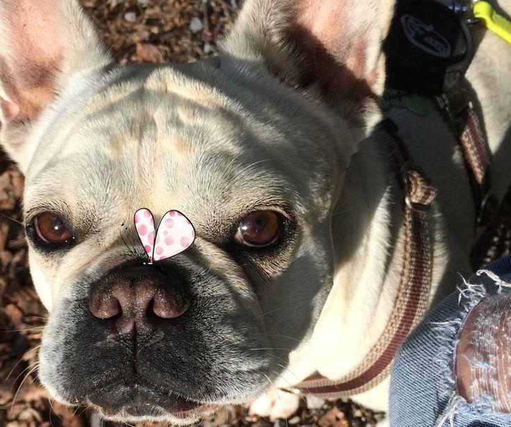 Hundekuchen zum Geburtstag selber backen: Rezept Vorschlag für 12 Apple