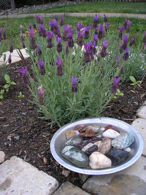 Bee Garden - Water Source by HarmonyArtMom, via Flickr