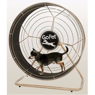 Small-Dog-Treadmill-GoPet-TreadWheel-Exercise-Safe-Stable-Indoor-OffLeash-Outlet