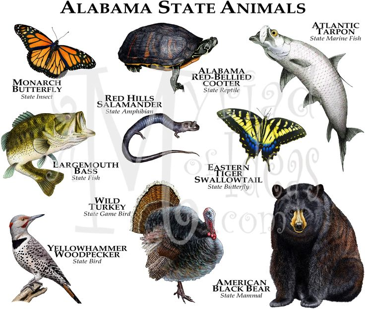 Alabama State Animals Animal lovers enjoy artwear of the