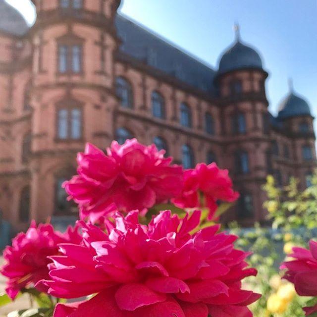 Schloss Gottesaue In Karlsruhe Ubrigens Finden Dort Noch Bis Zum 15 September Die Open Air Kino Nachte Statt Visitka Instagram Pictures Karlsruhe Instagram