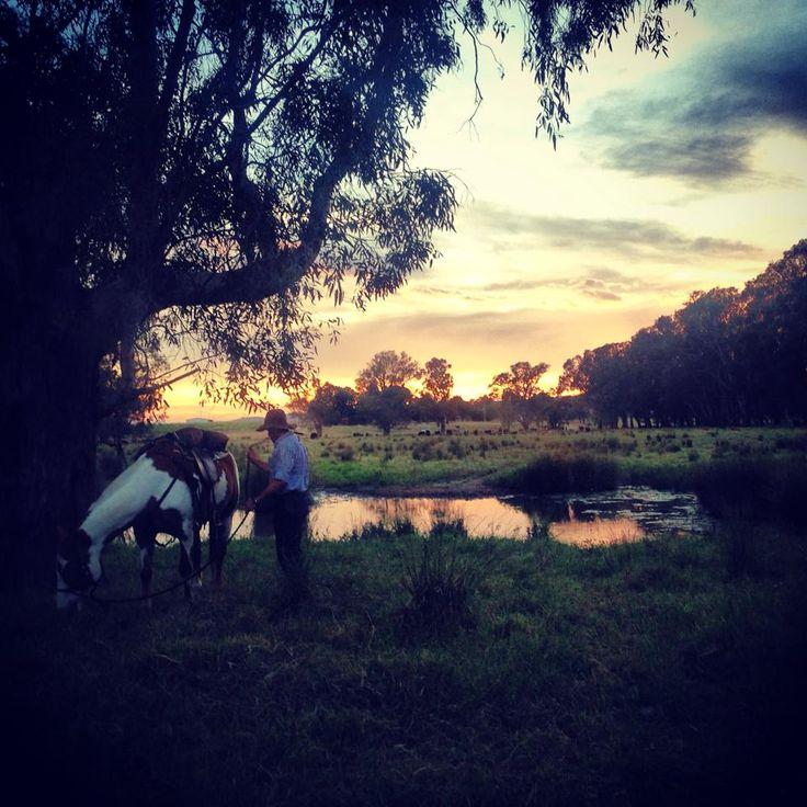 Sunrise on Forge's Annual North East Heritage Cattle Drive, Victoria, Australia.