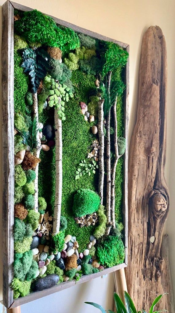 Living Wall Moss Art 26 X14 The Vertical Canopy Preserved Moss Art W Birch Branches Barnwoood Moss Wall Art Moss Wall Moss Art