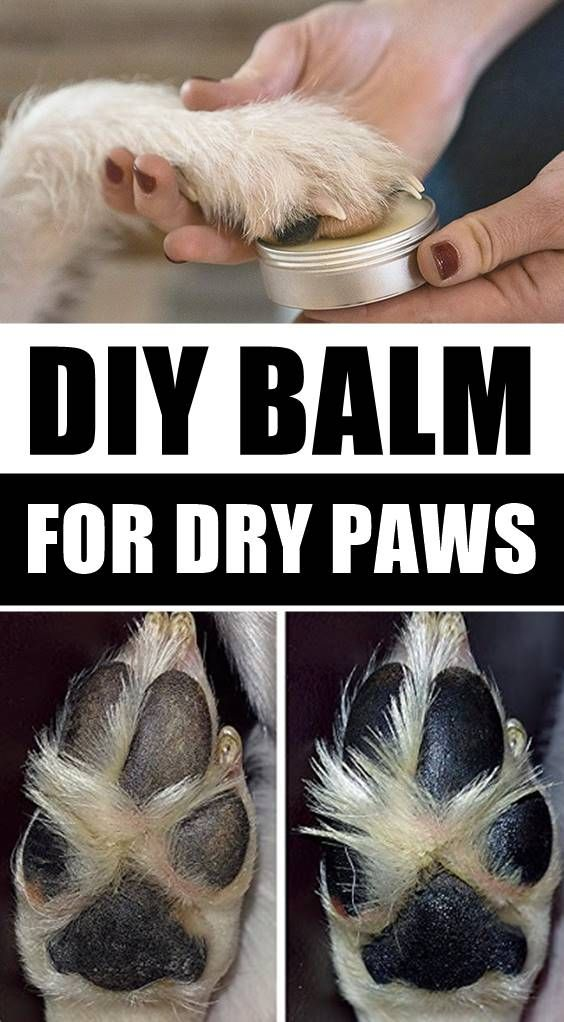 DIY Paw Balm For Dry Canine Paws