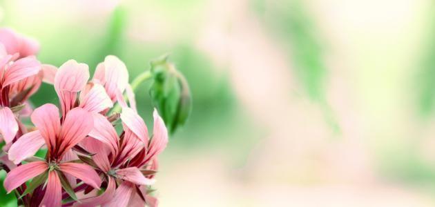 Classificazione delle piante da fiore - Forum Forum Unito https://it.fotolia.com/id/63551652