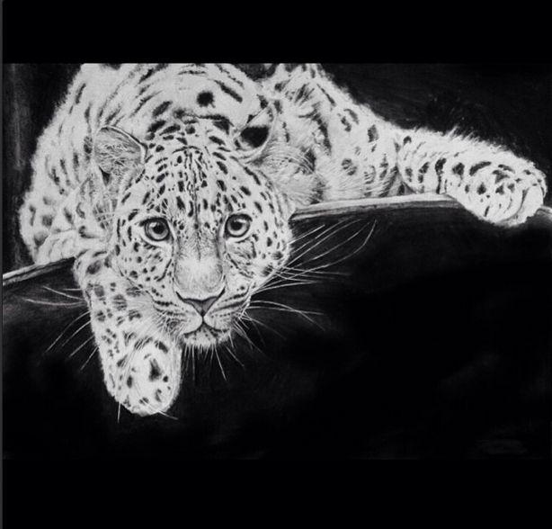 #draw #drawing #paint #painting #art #leopard #animal #animals #wild