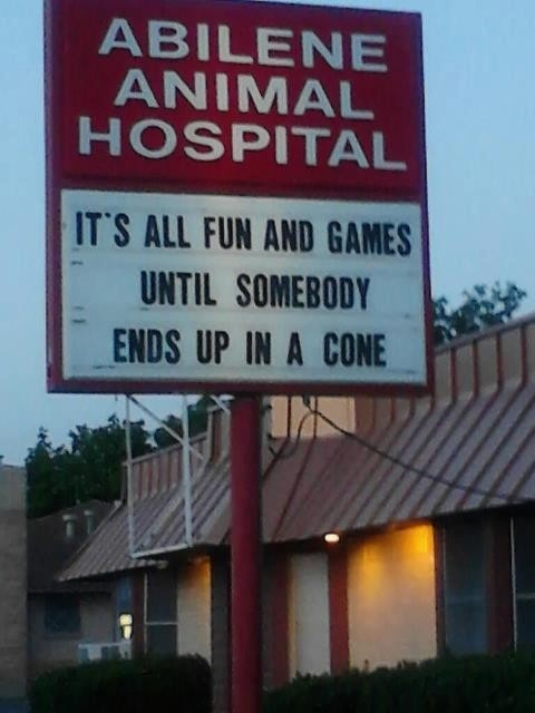 Animal Hospital Humor: Its all fun and games until somebody ends up in a cone.