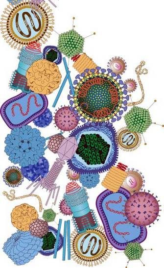 Viruses - I want this poster for my classroom!