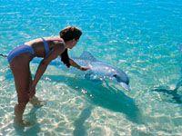[Monkey Mia Dolphins and Shell Beach Air Tour] Perth Tourist Lounge ::: Perth and Western Australia Tours