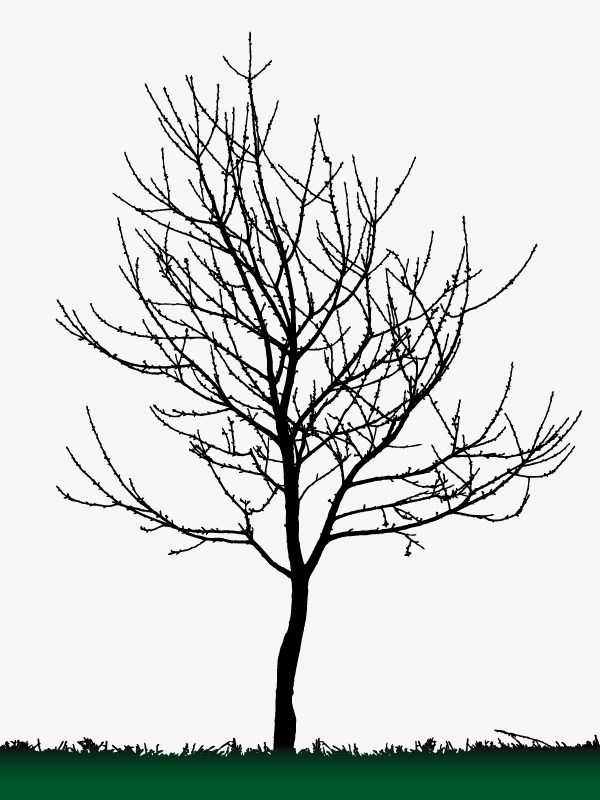Background Decoration Dead Tree Silhouette Vector Tree Silhouette Winter Trees Silhouette Vector