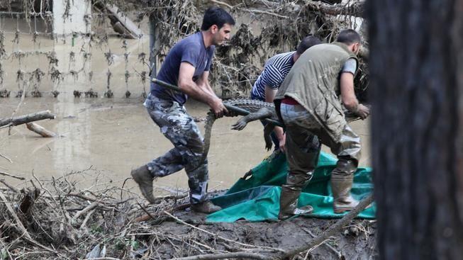 Zaměstnanci zoo se zachráněným krokodýlem