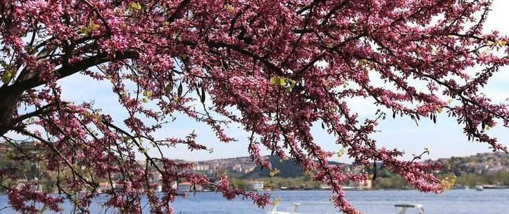 Top 10 Trees of Istanbul, Turkey
