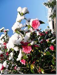 My father has send me this pictures of the snow, Kyoto is very cold in winter! Mi padre me ha mandado estas fotos de la nieve, en Kyoto hace mucho frío en invierno!