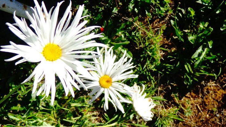 Flower garden   Flickr - Photo Sharing!