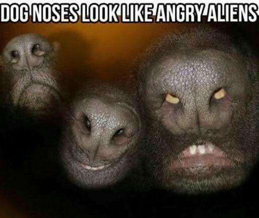 or super creepy owls