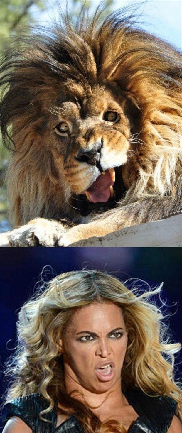 funny celebrity memes risa