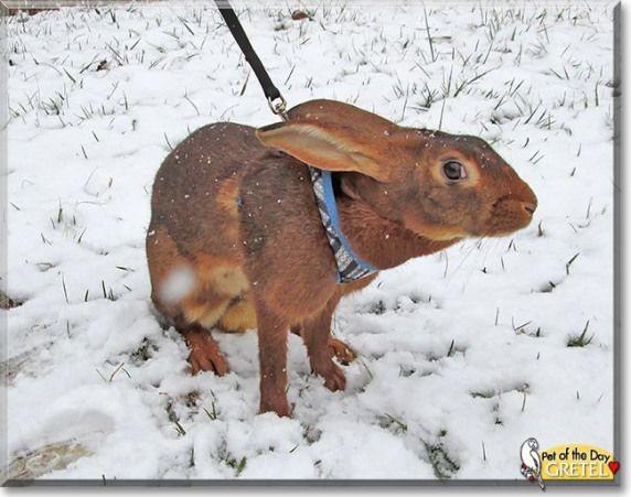 Pin Von Marianne Wevers Auf Kaninchen In 2020 Saugetiere Kaninchen Hering