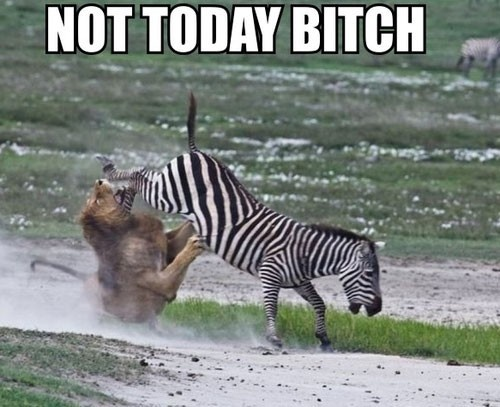 not today: Like A Boss, Funny Pics, Food Chains, Circles Of Life, Funny Pictures, The Faces, Funny Animal, So Funny, Animal Funny