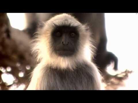 Zdumiewające Indie 01 Pustynia Thar  Święte piaski   Wildest India 01 Th...