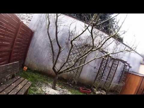 Taille d'un prunier mirabelle février 2017 - YouTube