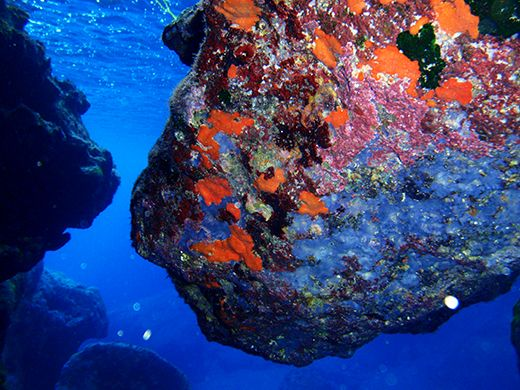 VISIT GREECE| Dive into the colourful biodiversity of the #Cretan sea. #Crete #summer #destination #visitgreece #nature #seabed #diving