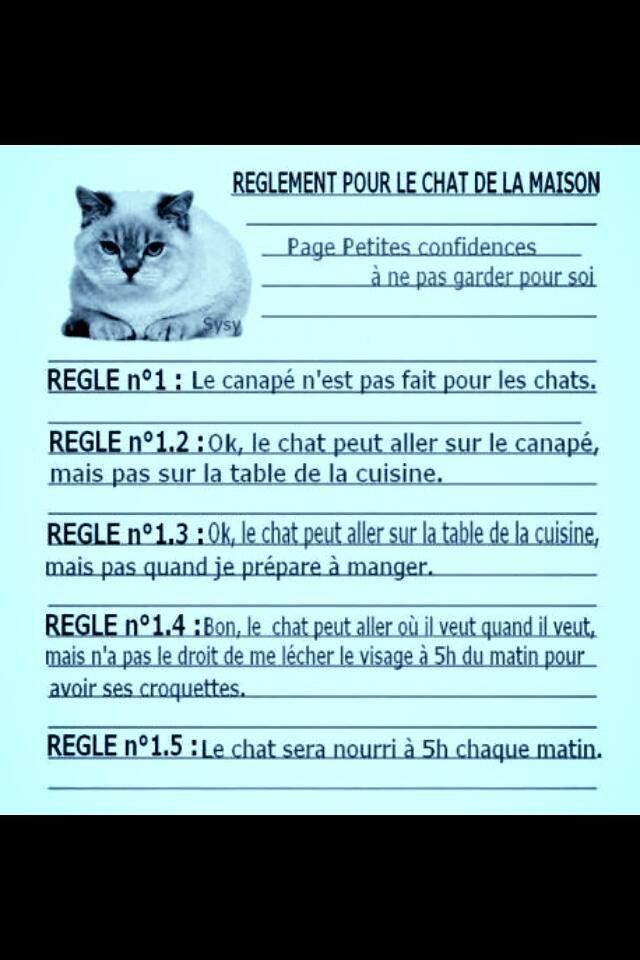 Règlement pour le chat de la maison